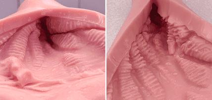 GYNOID Vagina Modell Standard-1