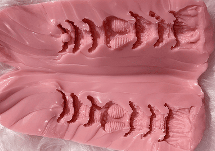 GYNOID Vagina Modell 14-2